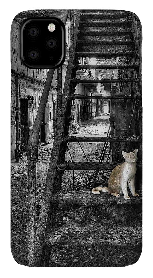 Abandoned IPhone 11 Case featuring the photograph Here Kitty Kitty Kitty... by Evelina Kremsdorf