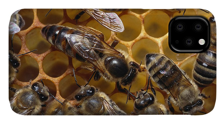 Honeybee IPhone Case featuring the photograph Honey Bees by Thorsten Klapp