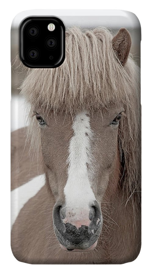 Horse IPhone 11 Case featuring the photograph Icelandic Treasure by Betsy Knapp
