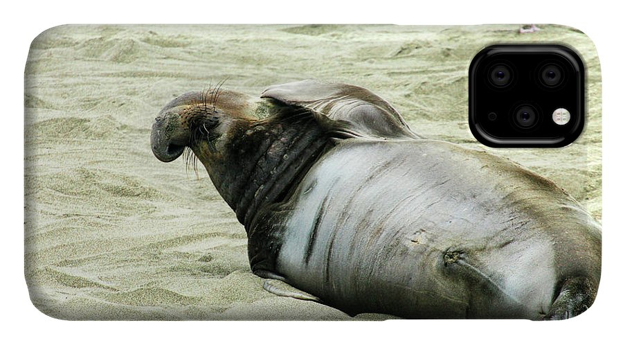 Elephant Seal IPhone Case featuring the photograph Im Too Sexy by Anthony Jones