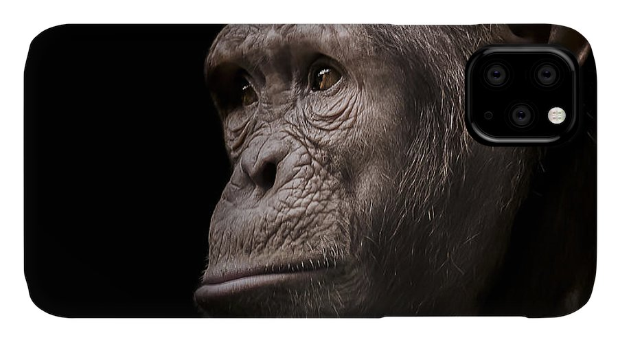 Chimpanzee IPhone 11 Case featuring the photograph Indignant by Paul Neville
