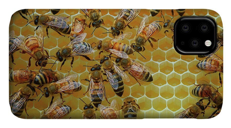Bees IPhone Case featuring the photograph Inside the Hive by Nikolyn McDonald