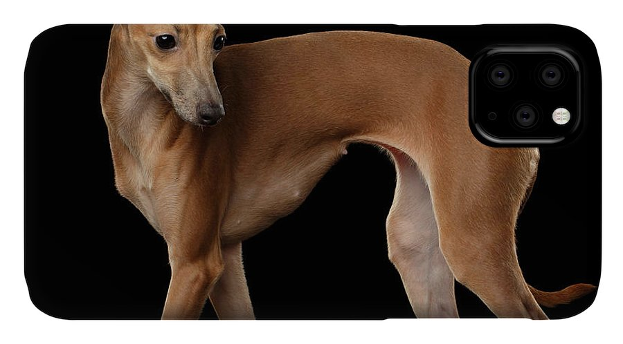 Greyhound IPhone 11 Case featuring the photograph Italian Greyhound Dog Standing Isolated by Sergey Taran