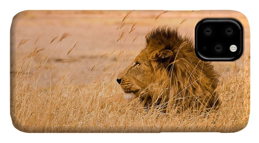 3scape IPhone 11 Case featuring the photograph King Of The Pride by Adam Romanowicz