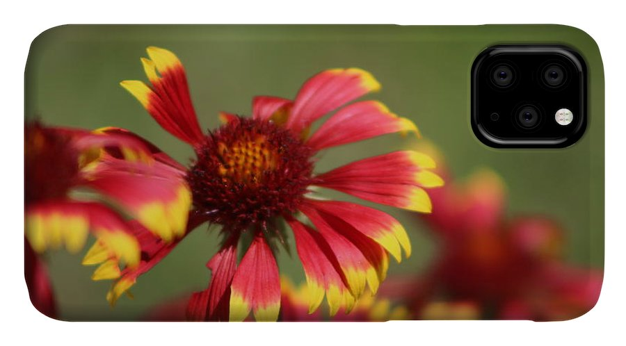 Coneflower IPhone Case featuring the photograph Lemon Yellow and Candy Apple Red Coneflower by Colleen Cornelius