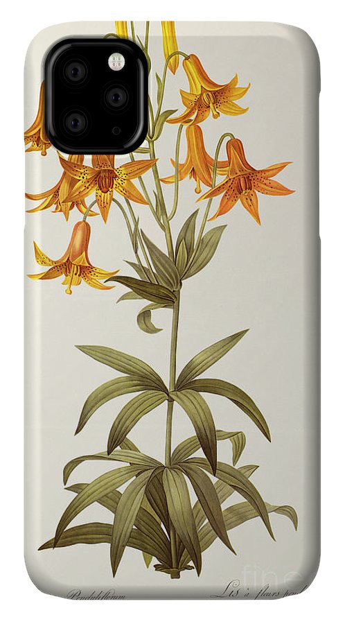 Lilium Penduliflorum IPhone Case featuring the painting Lilium Penduliflorum by Pierre Joseph Redoute