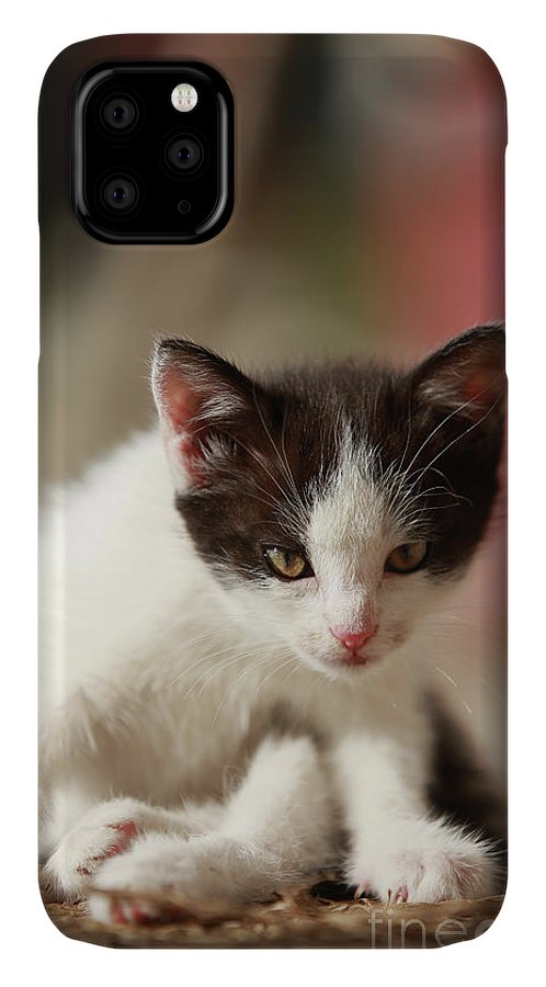 Cat IPhone Case featuring the photograph Little cute kitten by Jana Behr
