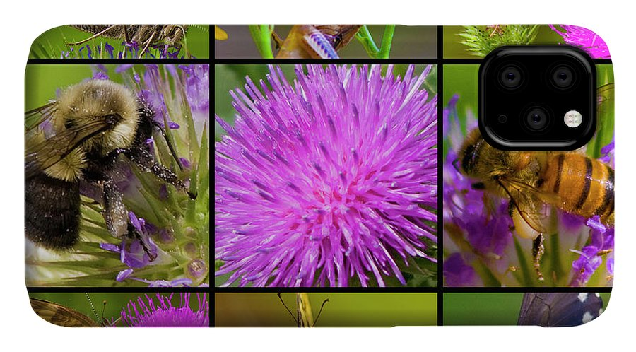 Nature IPhone 11 Case featuring the photograph Little Guys by Betsy Knapp