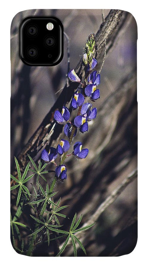 Flower IPhone 11 Case featuring the photograph Lonely Lupine by Randy Oberg