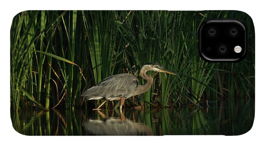 Animals IPhone Case featuring the photograph Looking For Breakfast by Ernie Echols