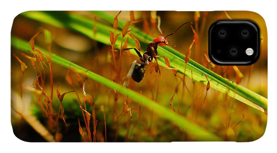 Ant IPhone 11 Case featuring the photograph Macro Of An Ant by Jeff Swan