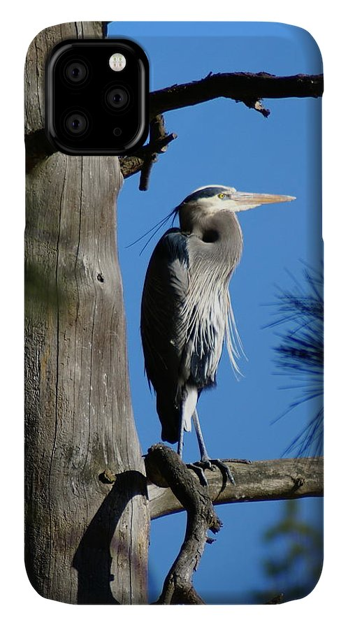 Birds IPhone Case featuring the photograph Majestic Great Blue Heron 2 by Ben Upham III