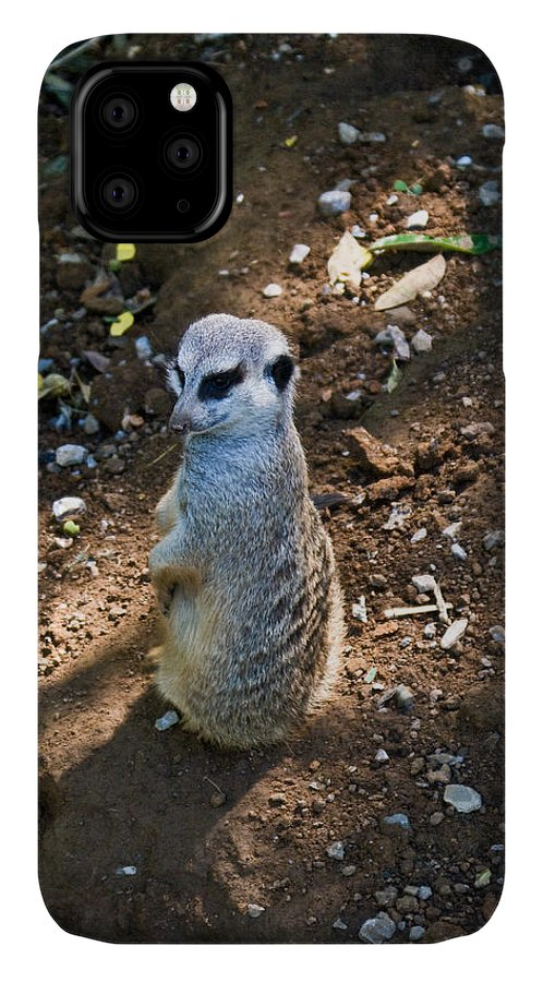 Meerkat IPhone 11 Case featuring the photograph Meerkat Spying On Neighbors by Douglas Barnett
