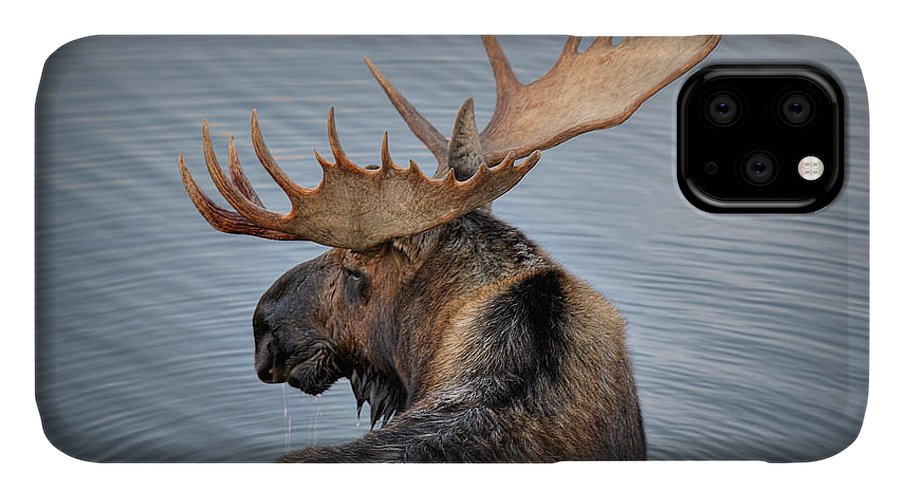 Moose IPhone Case featuring the photograph Moose Drool by Ryan Smith