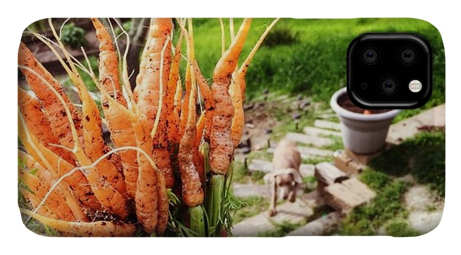 Farmtotable IPhone Case featuring the photograph Carrot Picking by Nancy Ingersoll