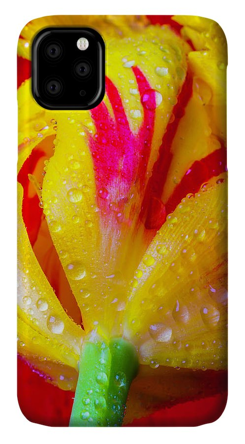 Green IPhone Case featuring the photograph One Lovely Tulip by Garry Gay