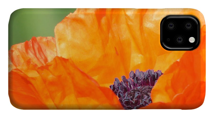 Poppy IPhone Case featuring the photograph Opium Poppy by Barbara St Jean