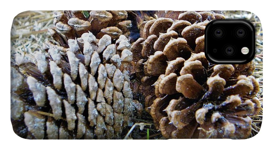 Pine Cones IPhone 11 Case featuring the photograph Pine Cones by Ric Schafer