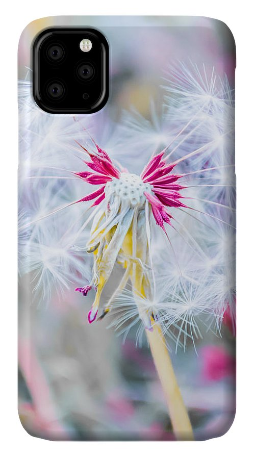 Pink IPhone Case featuring the photograph Pink Dandelion by Parker Cunningham
