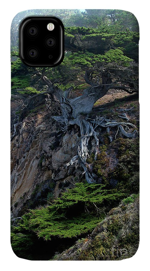 Landscape IPhone Case featuring the photograph Point Lobos Veteran Cypress Tree by Charlene Mitchell