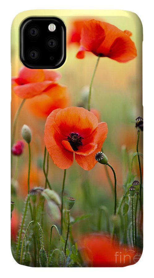 Poppy IPhone Case featuring the photograph Red Corn Poppy Flowers 06 by Nailia Schwarz
