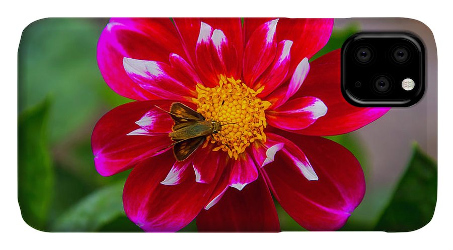 Dahlias IPhone Case featuring the photograph Red Dahlia With Small Moth by Garry Gay