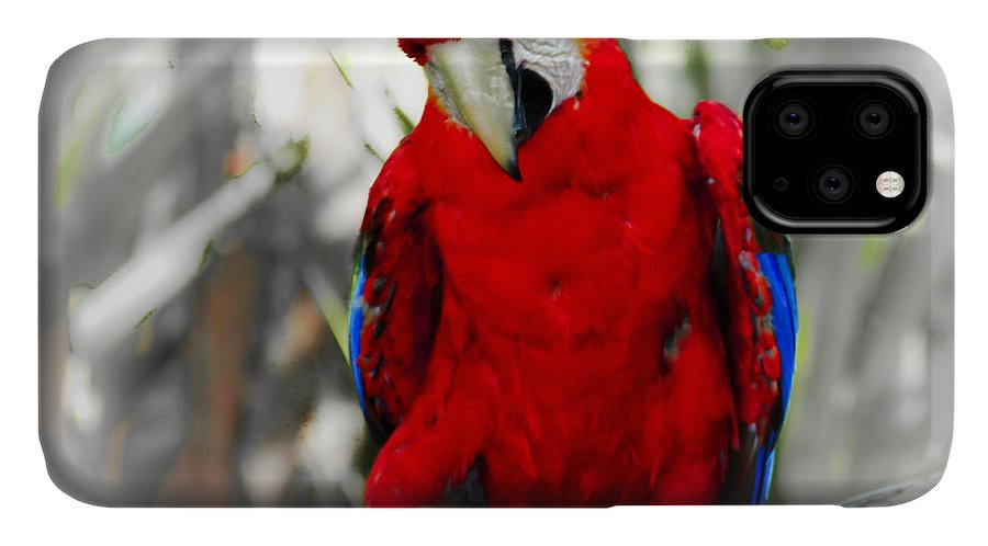 Brevard Zoo IPhone Case featuring the photograph Red Parrot by Roger Wedegis