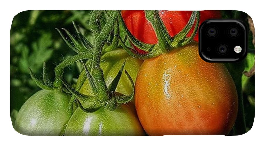 Tomato IPhone 11 Case featuring the photograph ripening #photography #garden by Andrew Pacheco