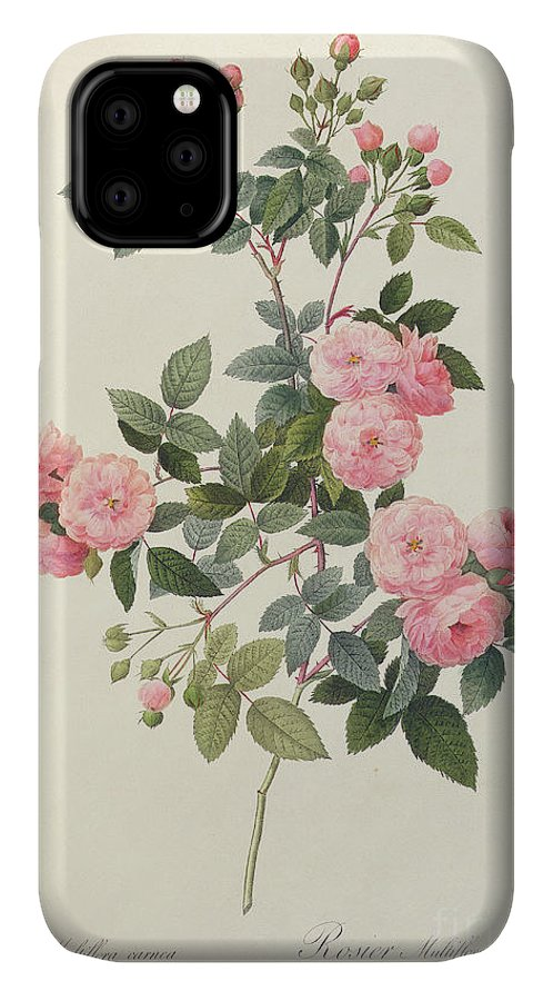 Rosa IPhone Case featuring the drawing Rosa Multiflora Carnea by Pierre Joseph Redoute