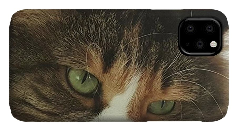 Petportrait IPhone Case featuring the photograph rosalie #cats #cat #pets #photo by Andrew Pacheco
