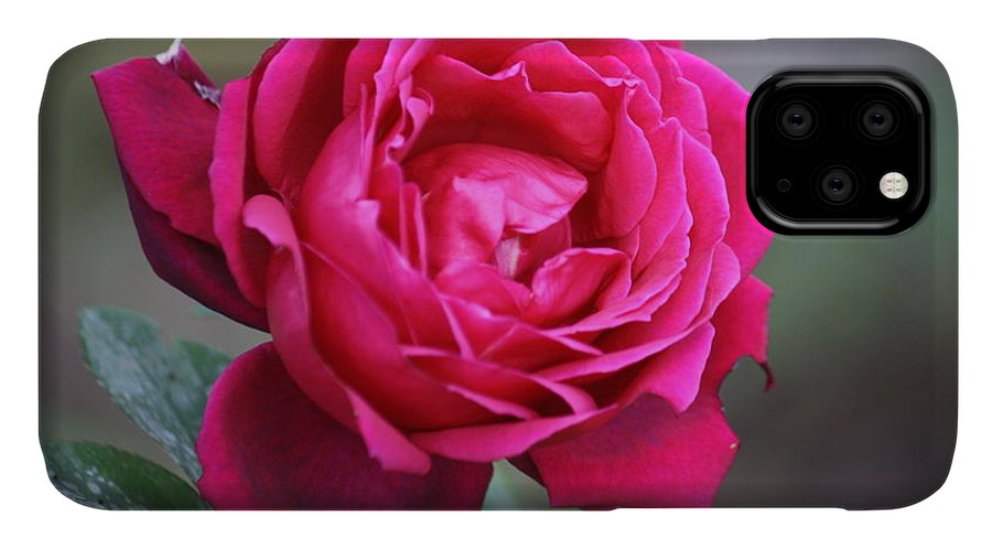 Floral IPhone 11 Case featuring the photograph Rose by Donna Walsh