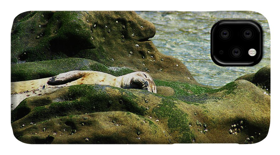 Seal IPhone Case featuring the photograph Seal On The Rocks by Anthony Jones