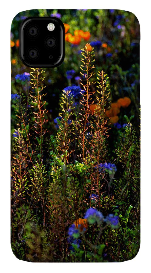 Flowers IPhone Case featuring the photograph Shimmers by Randy Oberg
