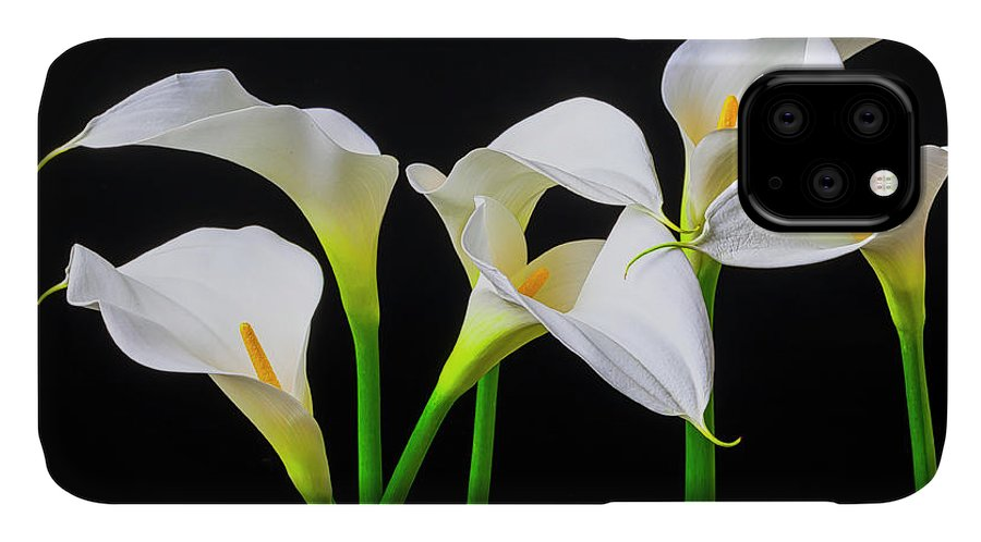 Graphic IPhone Case featuring the photograph Six Calla Lilies by Garry Gay