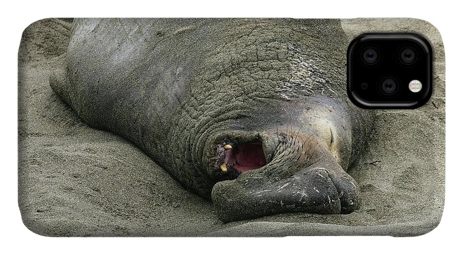 Elephant IPhone Case featuring the photograph Snoring Elephant Seal by Anthony Jones