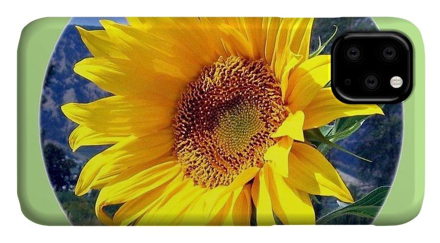 Sunflower IPhone Case featuring the photograph Solid Sunshine by Will Borden