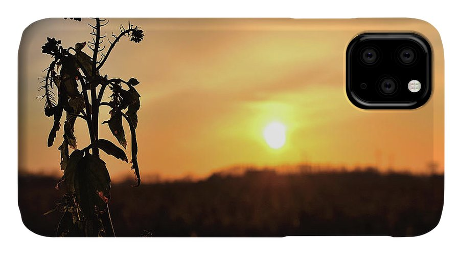 Sonnenuntergang Blume Flowwer Sky Himmel IPhone Case featuring the photograph Sonnenuntergang by Scimitarable