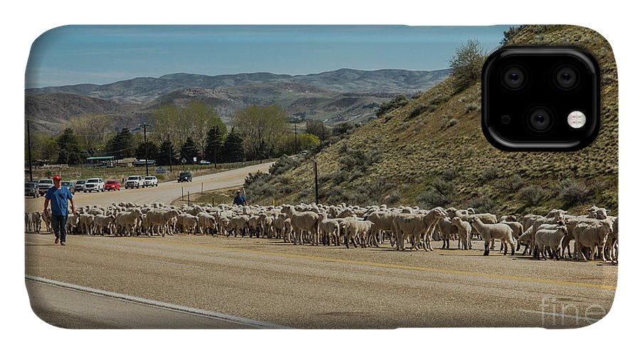 Herd IPhone Case featuring the photograph Spring Sheep Drive by Robert Bales