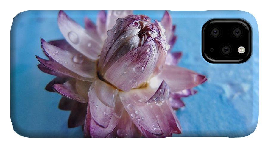 Purple IPhone Case featuring the photograph Straw Flower On Blue by Barbara St Jean