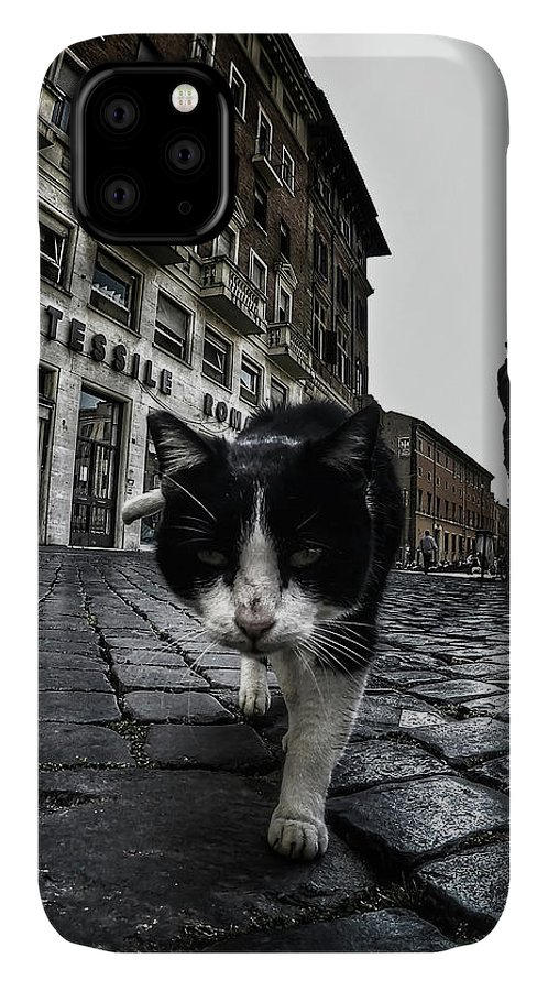 Cat IPhone Case featuring the photograph Street Cat by Nicklas Gustafsson