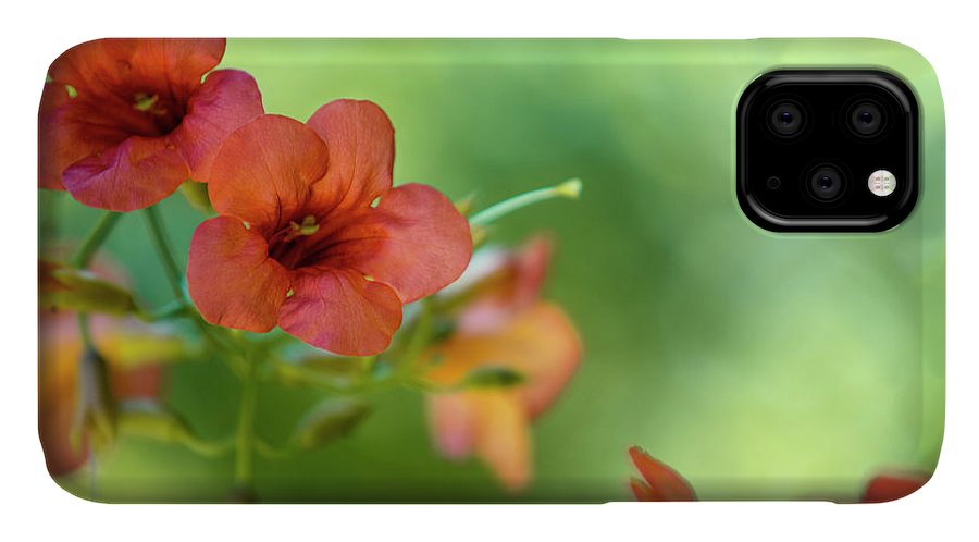Flower IPhone Case featuring the photograph Summer Flowers by Nailia Schwarz