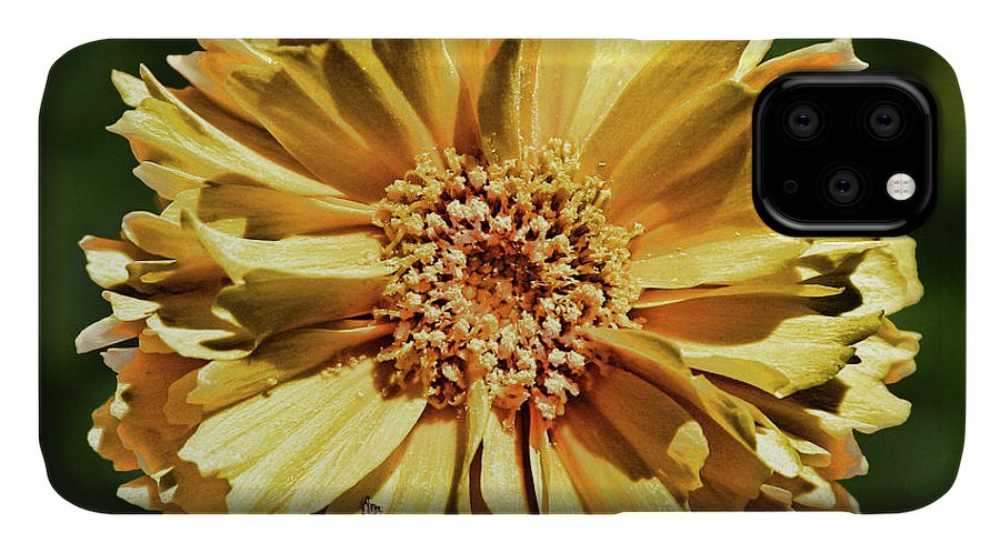 Yellow IPhone Case featuring the photograph Sunshine Flower by Marie Leslie