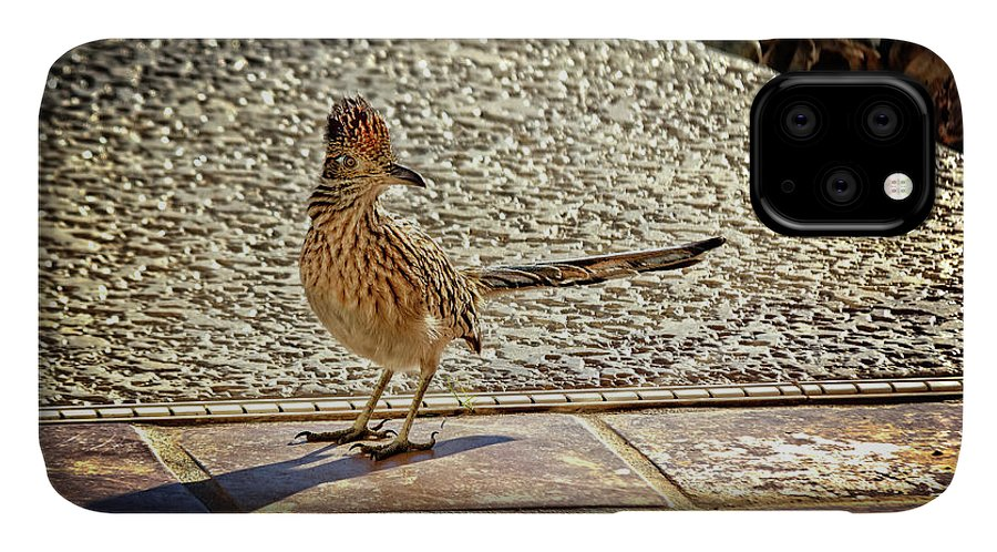 Greater Roadrunner IPhone 11 Case featuring the photograph The Roadrunner by Robert Bales