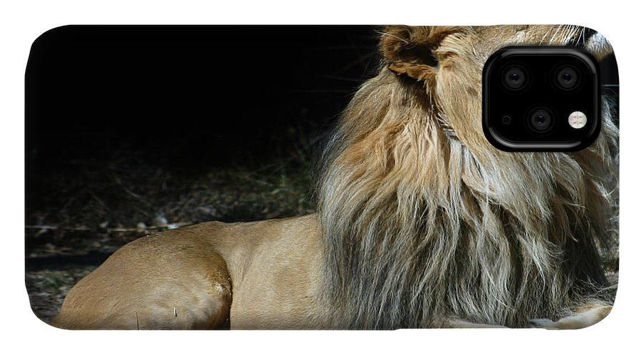Lion IPhone Case featuring the photograph This Is My Best Side by Anthony Jones