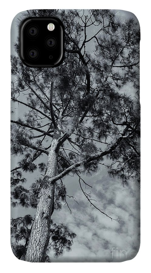 Tree IPhone 11 Case featuring the photograph Towering by Linda Lees