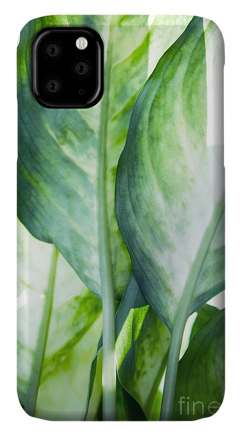 Summer IPhone Case featuring the painting Tropic Abstract by Mark Ashkenazi