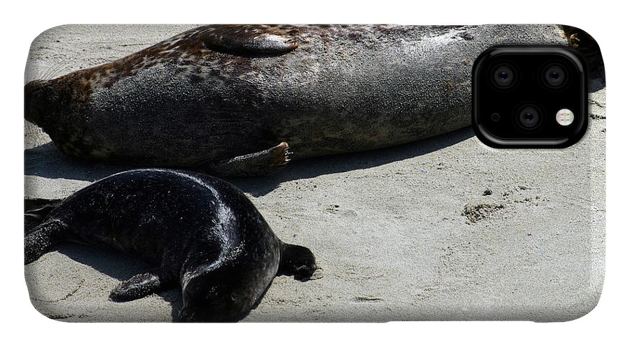 Seal IPhone Case featuring the photograph Two Seals by Anthony Jones