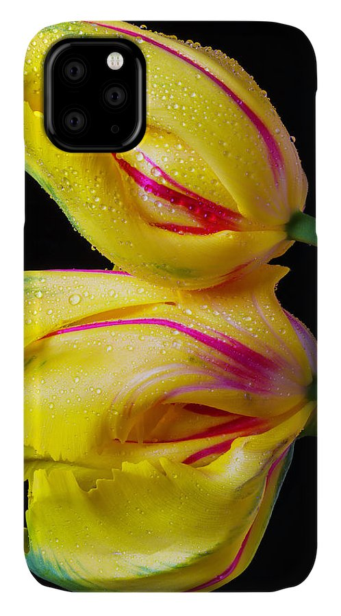 Green IPhone Case featuring the photograph Two Yellow French Tulips by Garry Gay