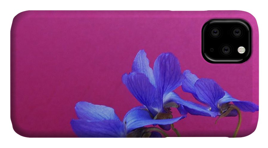 Violet IPhone Case featuring the photograph Violets On Hot Pink by Barbara St Jean