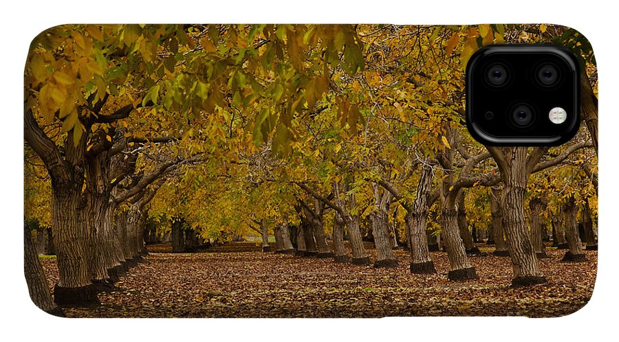 Agriculture IPhone Case featuring the photograph Walnut Orchard by Ron Sanford